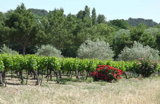 Paysages de Provence - Les Chambres de Charlotte